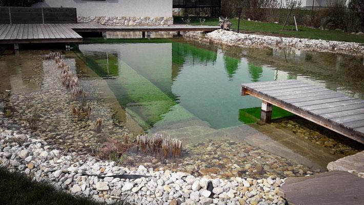 Teichreinigung Niederösterreich