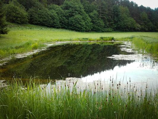 Teichreinigung in Niederösterreich
