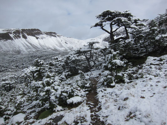Summer snowfall on the Dientes trek
