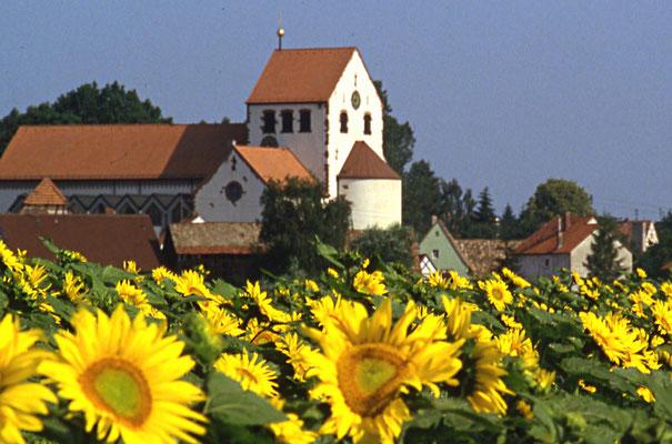 Sonnenblumen im Neufeld