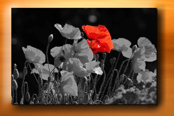 Eine weitere Möglichkeit der Bildbearbeitung: Das bearbeitete Bild mit Schlagschatten versehen und mit einer anderen Aufnahme kombinieren.