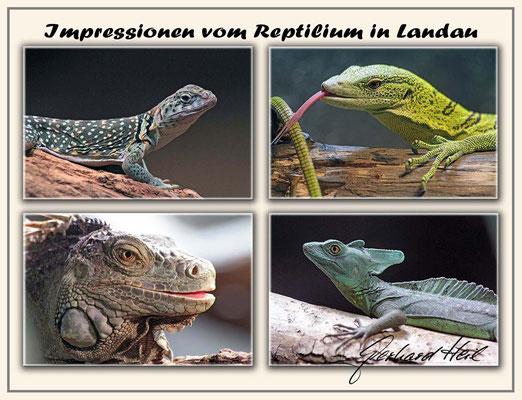 Im Reptilium Landau
