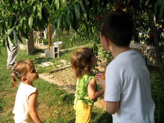 Obst für die Kinder