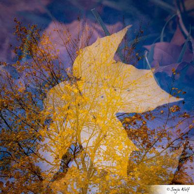 """Oktober: """"Mehrfachbelichtung"""" / Ahorn"""