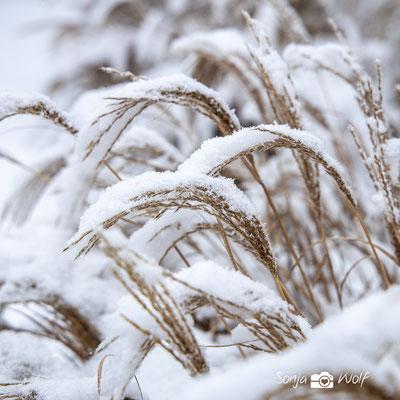 Woche 03 / Gräser im Schnee