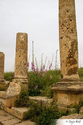 Blumen zwischen Säulen
