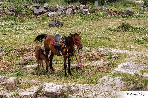 Pferde warten auf Touristen