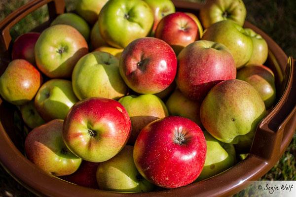 Woche 39 / Äpfel