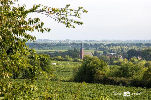 Blick zum Forster Kirchenstück