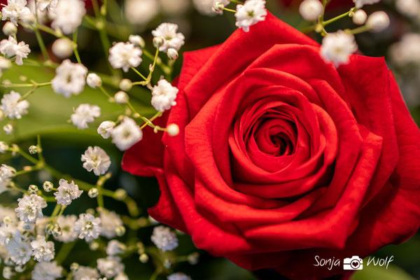 Woche 07 / Valentine