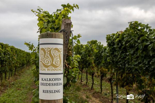 Von Winning - Riesling