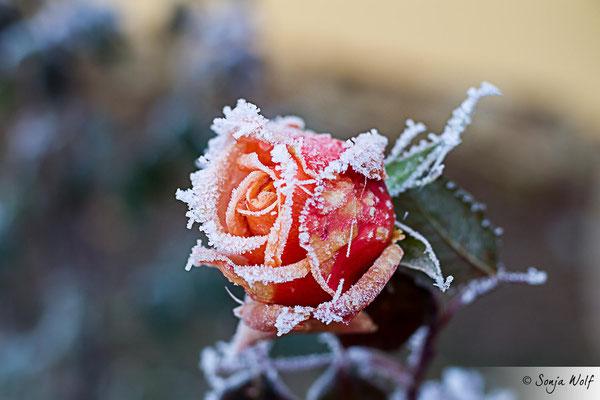 Woche 52 / Frost