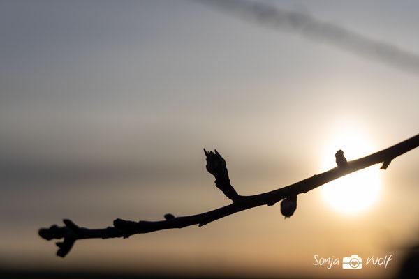 Zweig im Morgenlicht