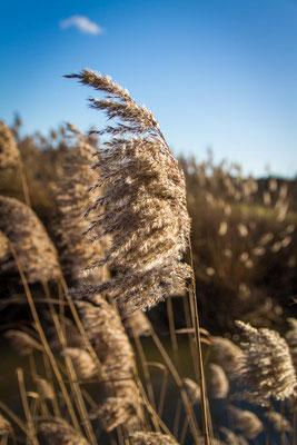 Woche 01 / Gräser in der Sonne
