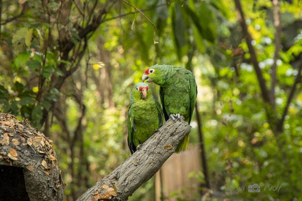 Papageien im Parque Historico
