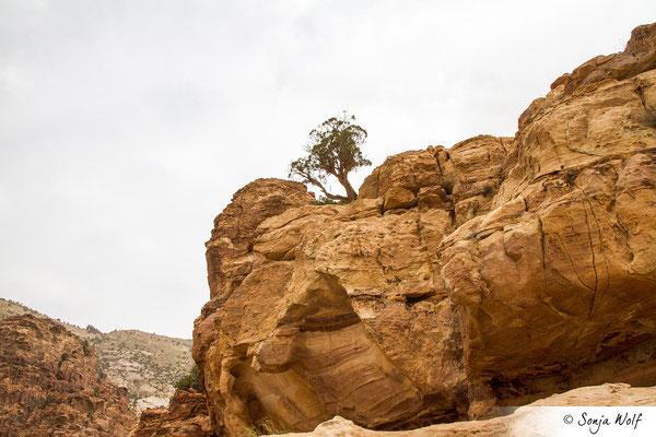 Fels mit Baum