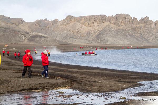 Im Hintergrund mutige Antarktis-Schwimmer