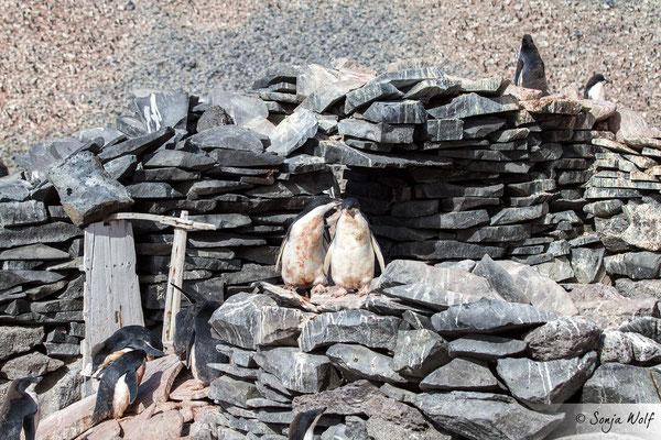 Reste der Steinhütte von 1903