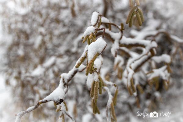 Zweige mit Schnee