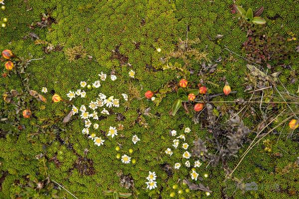 Vegetation im NP Cajas