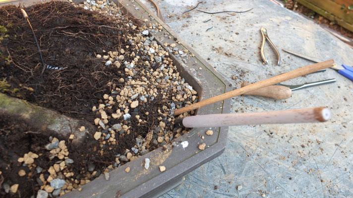 Baum mit Haltedrähten fixieren, Erdmischung mit Holzstäbchen verdichten