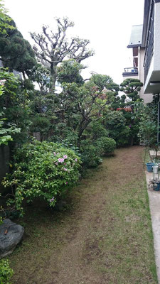 庭全体手入れ及び草取り後