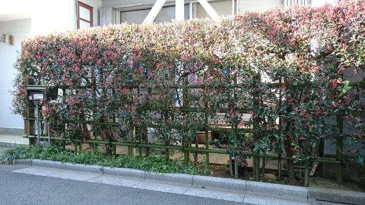 生垣の丸太・竹交換