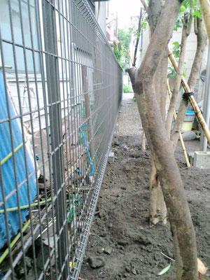 フェンスと移植した樹々