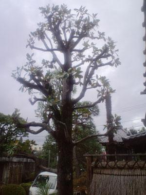 タイサン木