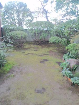 庭全体に広がる苔