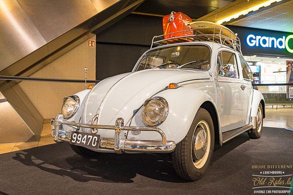 Let'z Bug Ausstellung