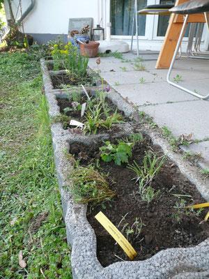 im April 2012 wurden die Pflanzsteine bepflanzt