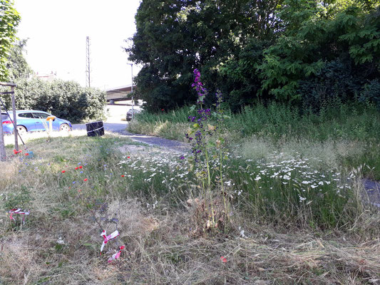 Im Juni haben wir das hohe Gras gemäht und dabei Wilde Malve und Schafgarbe stehen gelassen.