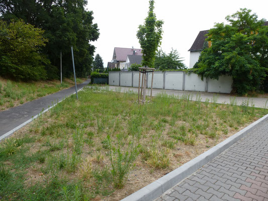 So sah unser Beet im Sommer 2020 aus. Es wurde von der Stadt im Herbst 2019 neu angelegt und ein Baum gepflanzt.