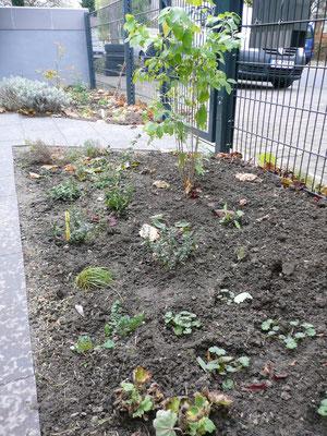 wurde der Vorgarten neu bepflanzt