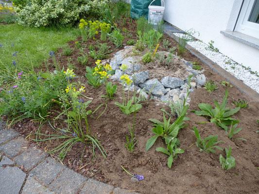 und gepflanzt