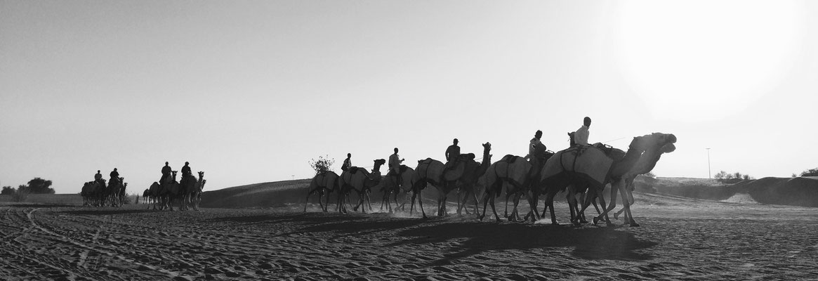 Race Camels - Filming in the UAE for Adventure Orient