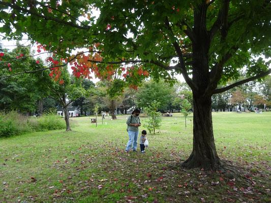 10月14日(水)彩の森公園で葉っぱでカードつくり 次回は10月28日(水)木の実を見つけよう!一緒にあそびましょう。