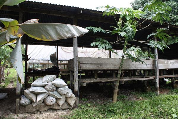 Projekt der Initiative WIR SINNd: zum Schutz des Regenwaldes in Costa Rica