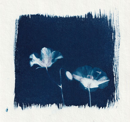 """Poppy Flowers"", Cyanotype (17 x 23 cm), Hahnemühle-Papier, 2019"