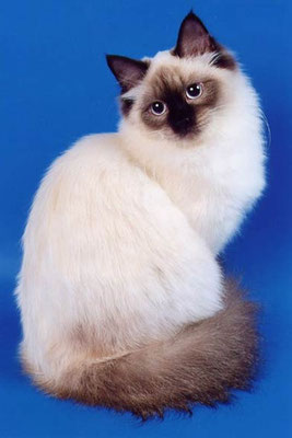 Клуб кошек москва фауна бойцовский клуб шатун москва