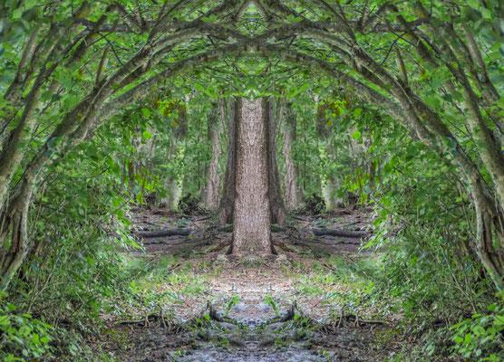 Die Baumkonferenz