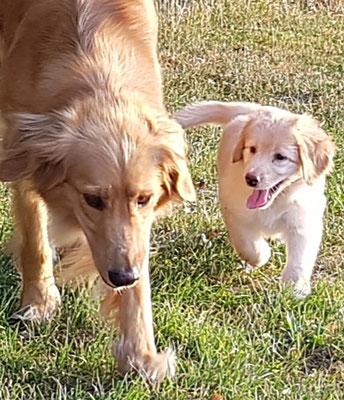 Catta und Akira vom Hof Mönkenbrook
