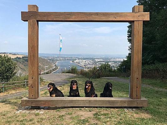 Blick von der Kanzel nach Andernach (Indira, Annabelle, Baki, Brooki)