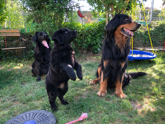 Joy, Abby (8 Wochen) und Opa Baki