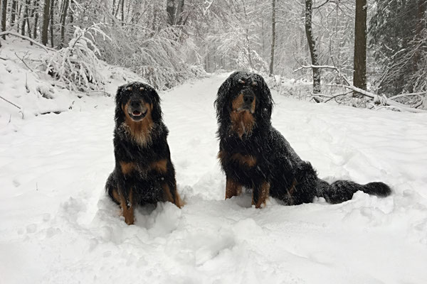 Halbschwester Annabelle vom Silberdistelwald ( links)
