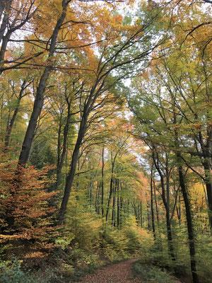Herbst am Petersberg
