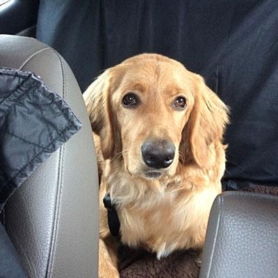 Im Auto auf der Rückbank unterwegs
