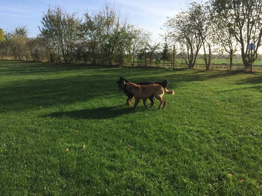 Hundeplatz Niederelvenich