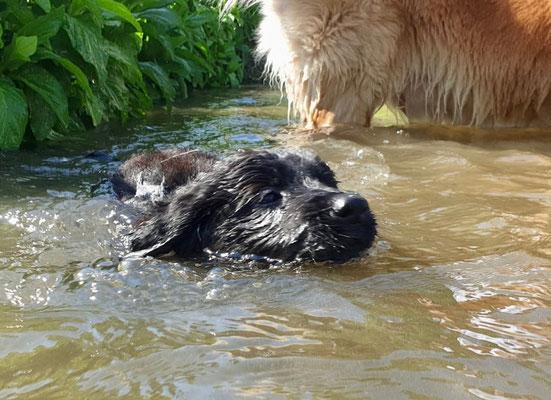 Seepferdchen mit 7 Wochen